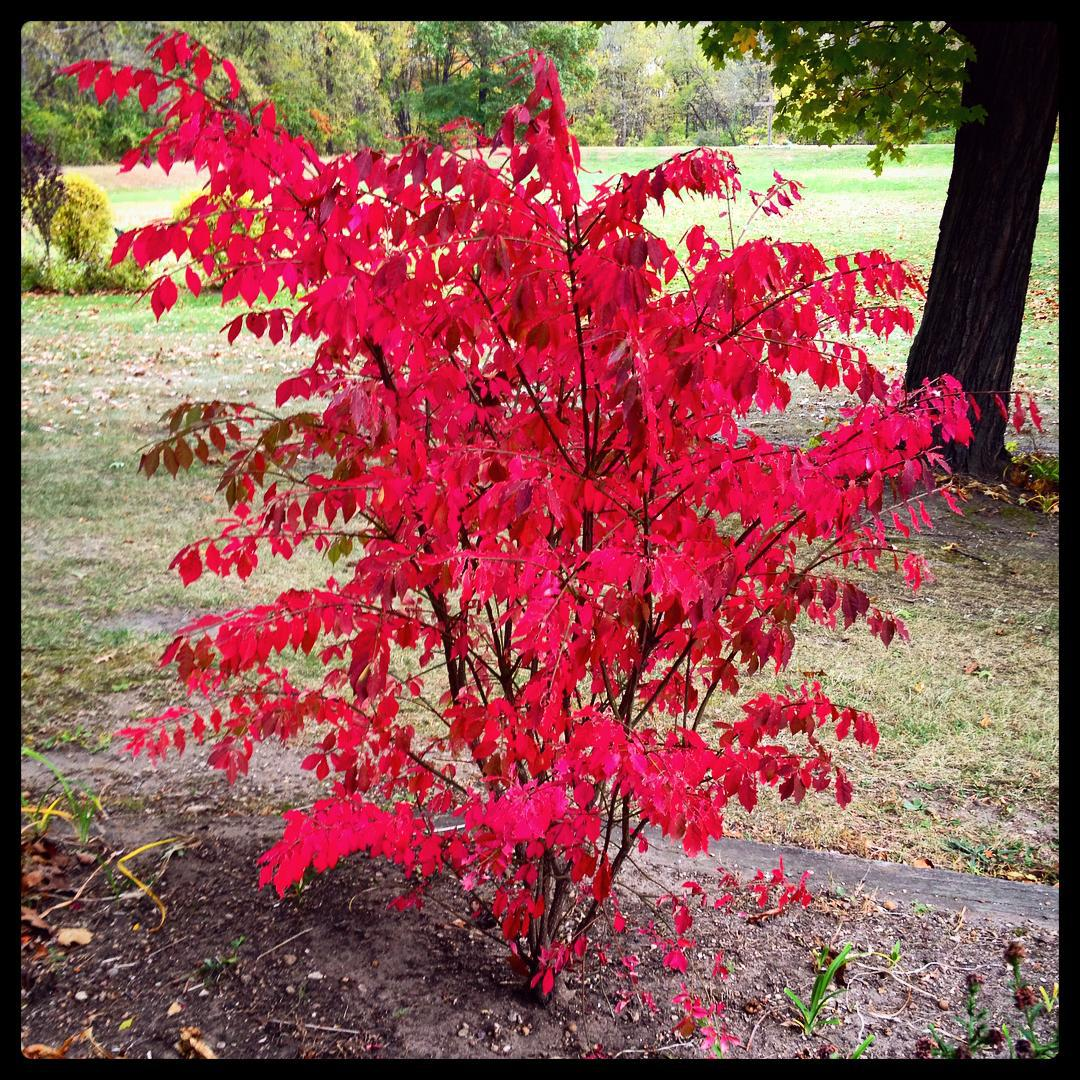 "Burning bush outside my office window. ""Take off your shoes for this is holy ground."" #voiceministriescamp #voiceministries"
